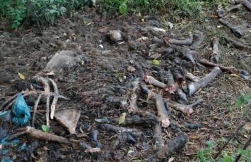 deponija-animalnog-otpada (1)